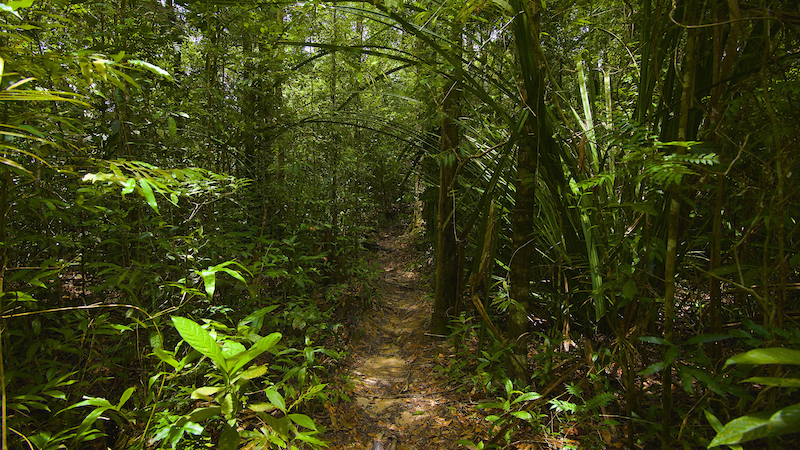 Rainforest Running Trail - Thailand